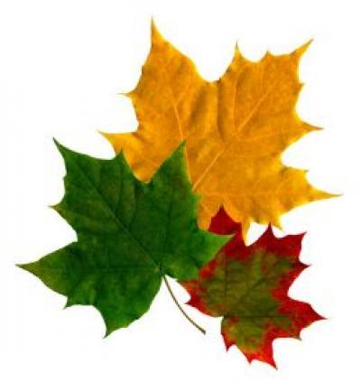 Výsledek obrázku pro obrázek podzimní listí